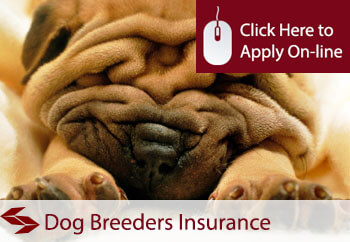 dog breeders insurance